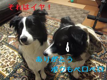 dog20080215 005