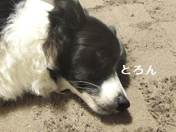 dog20080215 013