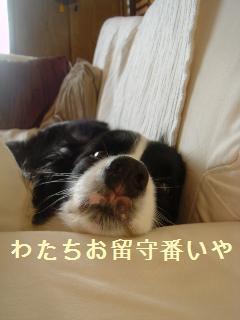 dog20080228 005