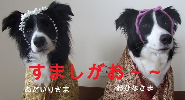 dog20080303 020