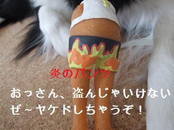 dog20080303 031