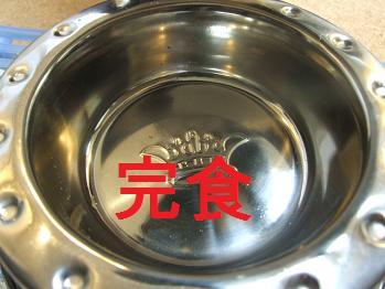 dog20080304 005