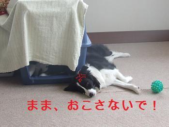 dog20080303 013