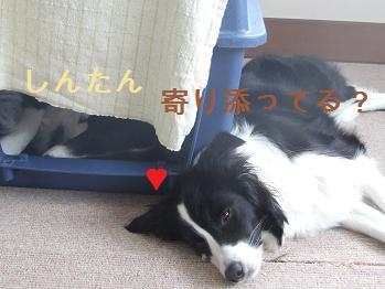 dog20080303 015