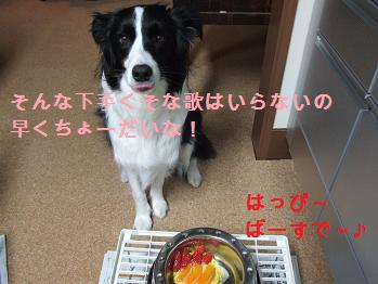 dog20080306 010