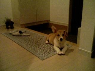 ・・・忠犬?