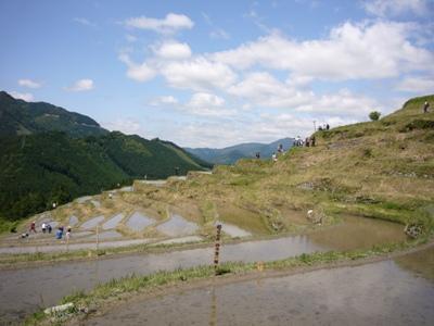 20070520丸山千枚田田植え (1)