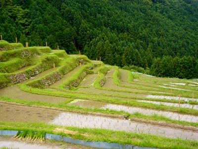 20080601丸山千枚田 (4)