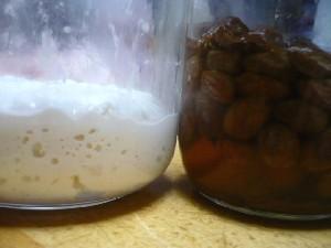 ヨーグルト酵母