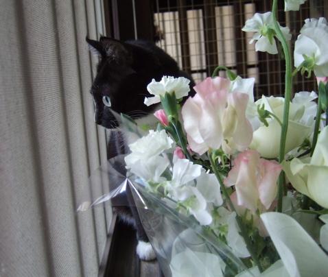 080303mo_flower1.jpg