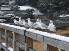 渡月橋と鳥