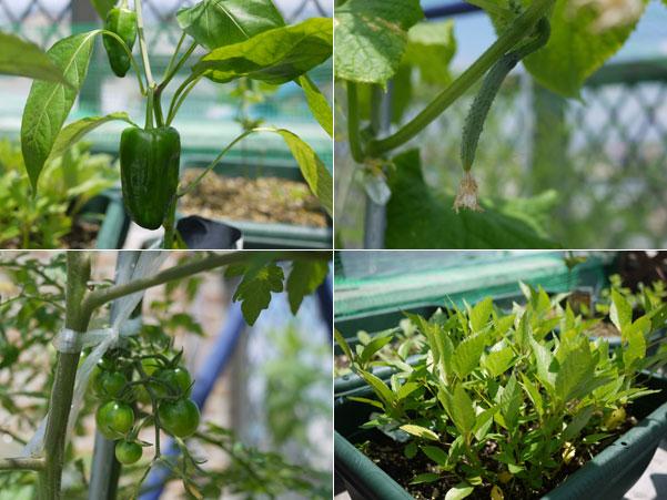 201106023野菜1