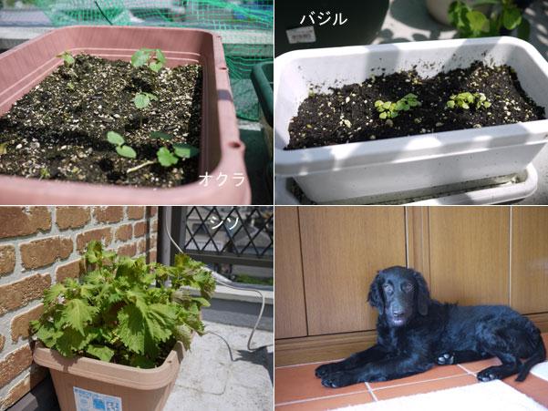 201106023野菜2