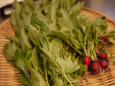 20110711収穫