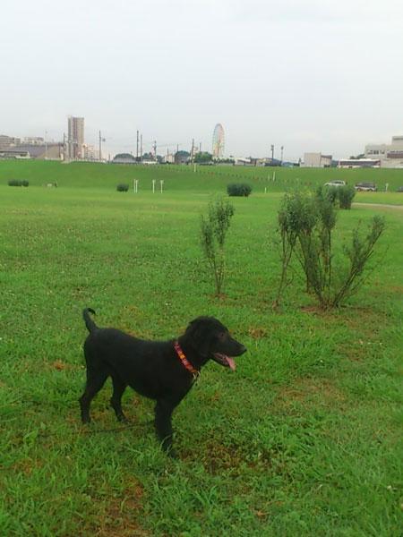 20110712お散歩1