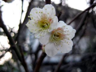 20080303_kinkan-1.jpg