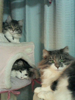 catfamily.jpg