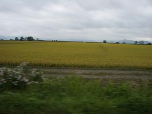猪苗代湖畔の田んぼ
