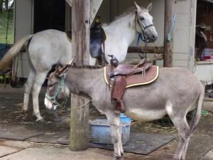 乗馬と乗ロバ