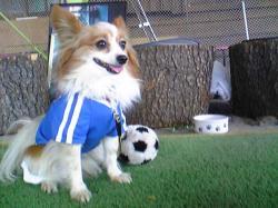 サッカーサブ