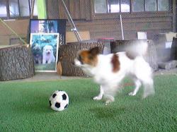 サッカーぷりん
