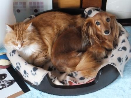 茶々とスシ桶ベッドで♪
