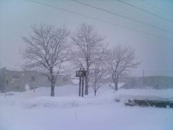 今朝は雪の旭川です