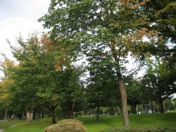 初秋の常磐公園