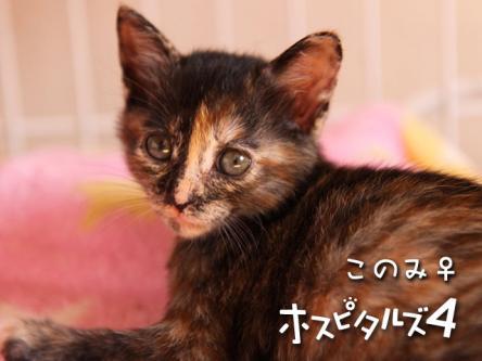 02_konomi.jpg