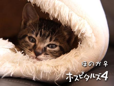 05_honoka.jpg