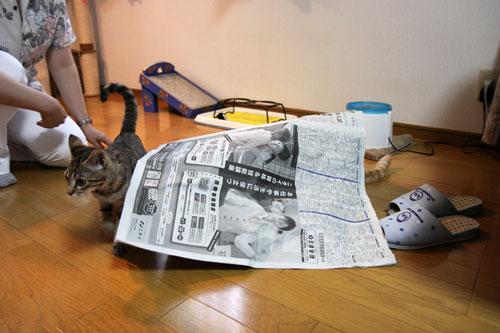 新聞スキー