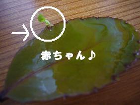 P1010370blog.jpg