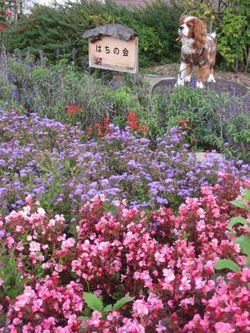 ショコラ 004花壇2
