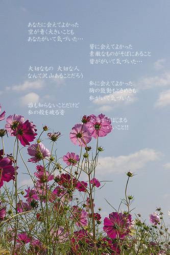 IMGP9028.jpg