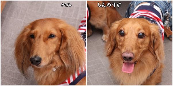 4 殿&姫