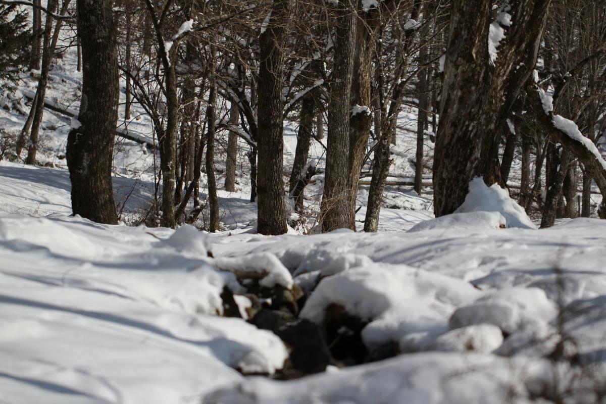 木曽駒高原の森