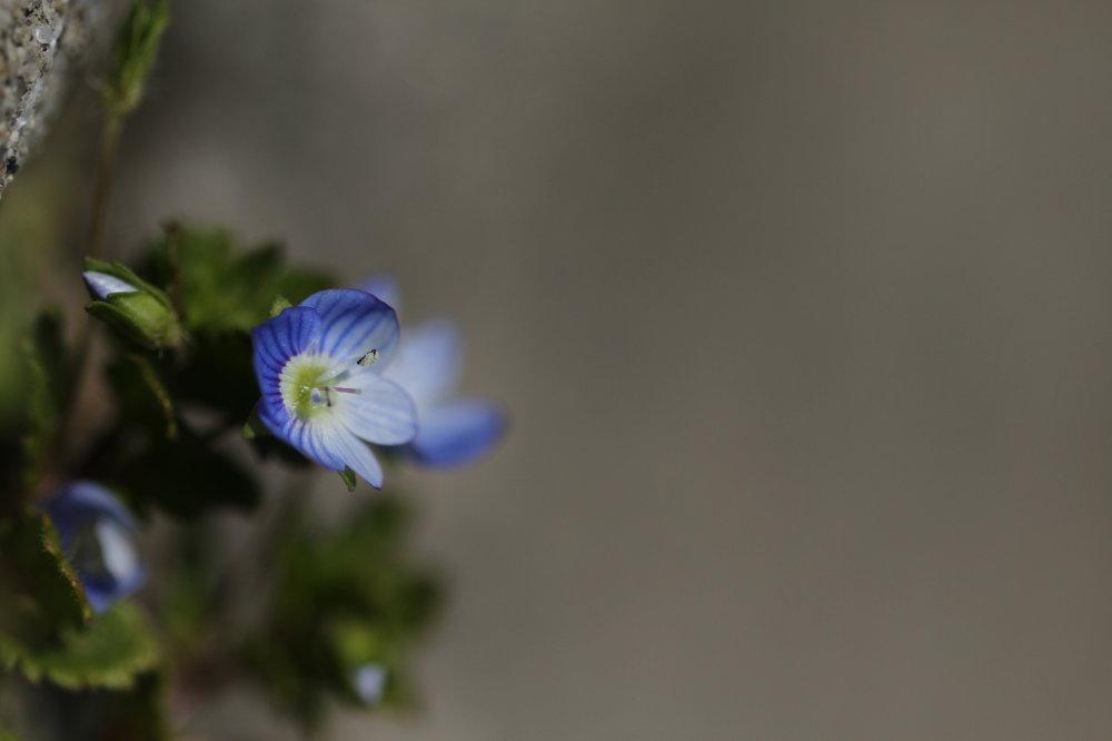 どこにでもある可愛いお花