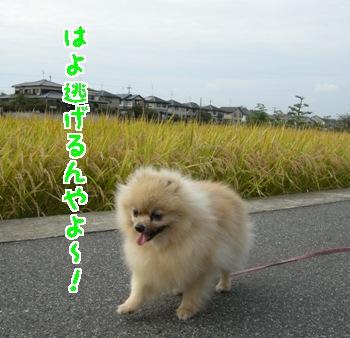 871019.jpg