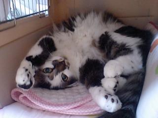 adoption_kitty.jpg