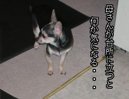 cooking_chuchu.jpg