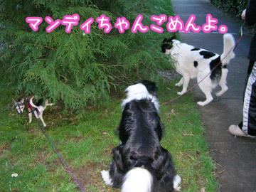 dogsitter1.jpg