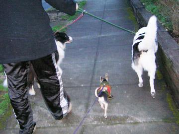 dogsitter2.jpg