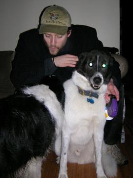 dogsitter4.jpg