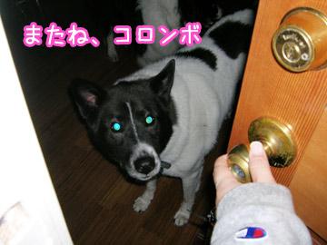 dogsitter9.jpg