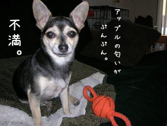fukatsu11.jpg