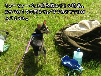fukatsu2.jpg