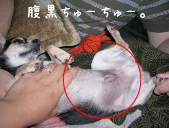 fukatsu6.jpg