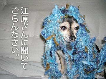 miwasan1.jpg