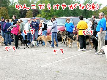 pawsinwalk12.jpg