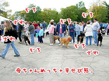 pawsinwalk13.jpg